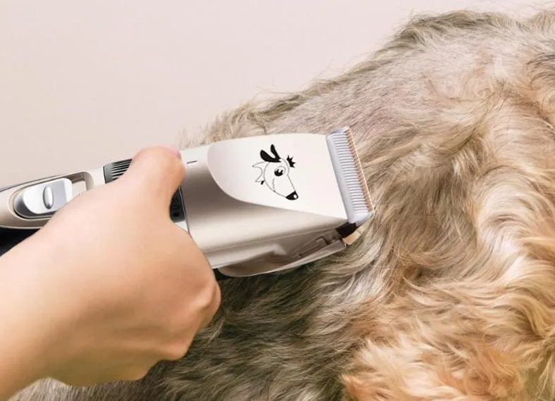 best dog clipper uk