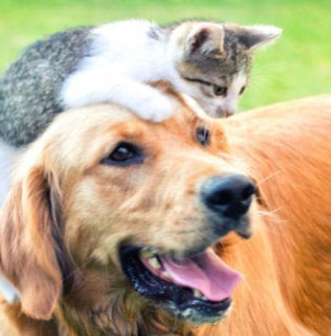 cat over dogs head