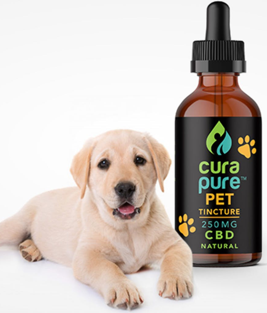cbd oil for dogs 250 mg
