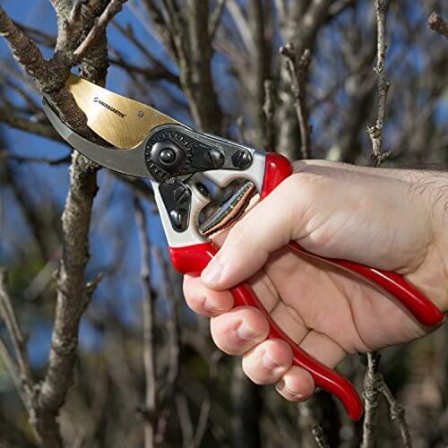 Using Pruning Shears