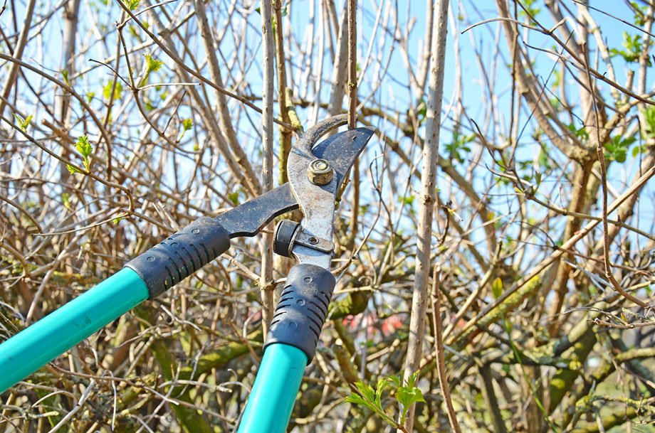 garden loppers